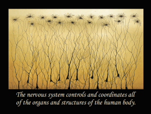 Chiropractic Quotes And Sayings Posters