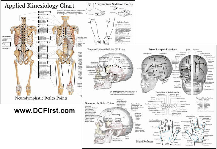 Applied Kinesiology Chart