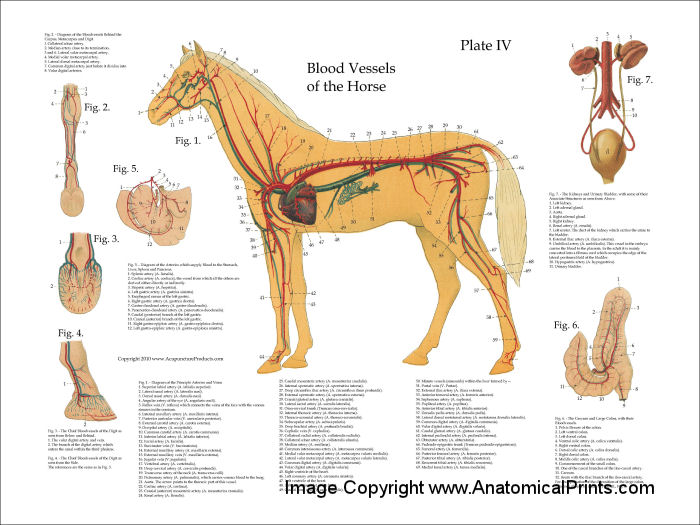 horse chart - Fashion.stellaconstance.co