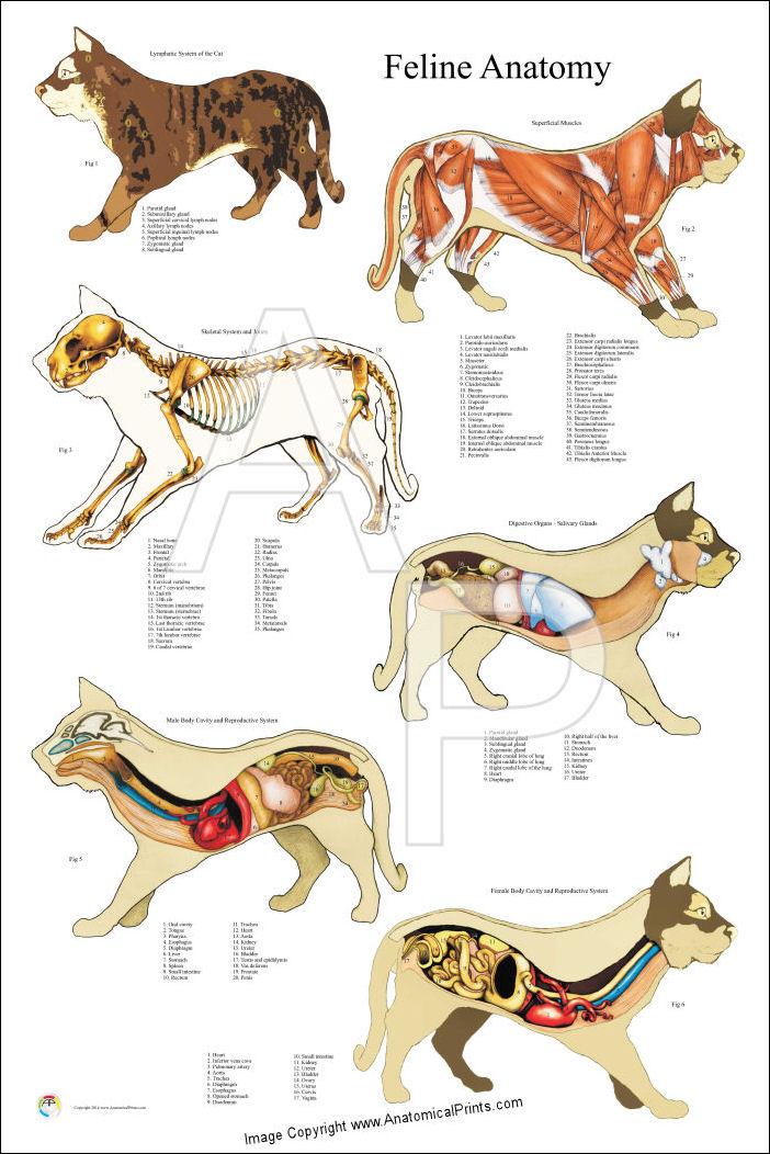 Cat external anatomy 5471379 - follow4more.info